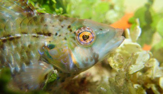 色が変わる魚たち